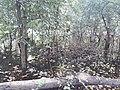 Parmadan Forest 12.jpg