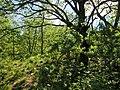 Parque Natural de Montesinho Porto Furado trail (5732603433).jpg