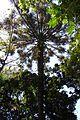 Parque da Cantareira-Vegetação Nativa 03.jpg