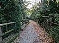 Passeggiata lungo il rio del Parco Cittadino del Bosco Farnetto - panoramio.jpg