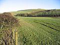 Pasture near Teindside Cottage - geograph.org.uk - 328331.jpg