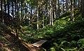 Path to a sunny patch in Gullmarsskogen ravine 5.jpg