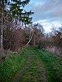 Pathway, Ribnitz-Damgarten (P1070878).jpg