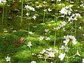 Pflanzen auf Wasser.jpg