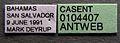 Pheidole megacephala casent0104407 label 1.jpg