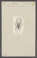 Philoica - Print - Iconographia Zoologica - Special Collections University of Amsterdam - UBAINV0274 068 05 0007.tif