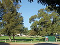 Pinetrees, grass and busstop in the Bradley Reserve.JPG