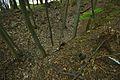 Pinky v lese severozápadně od hradu Pernštejn, Smrček, Býšovec, okres Žďár nad Sázavou.jpg