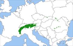 Sosna limba: zasięg występowania na mapie