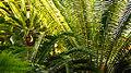 Plant, botanic garden Munich.jpg