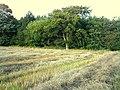 Plantation behind Dalton Hillhead Farm - geograph.org.uk - 508716.jpg