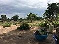 Plantation in Rhino Camp.jpg
