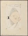 Platax vespertilio - 1700-1880 - Print - Iconographia Zoologica - Special Collections University of Amsterdam - UBA01 IZ13500485.tif