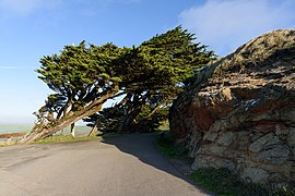 Point Reyes Lighthouse Trail December 2016 007.jpg