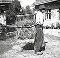 Pokladavni koš (živini pokladajo), Artiža vas 1950.jpg