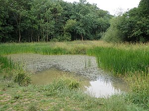 Aversley Wood - Image: Pond in the heart of Aversley Wood geograph.org.uk 1516268