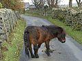 Pony at Mosedale.jpg