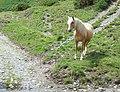 Pony by the Ford, Nant Llwydd, Ceredigion - geograph.org.uk - 511066.jpg