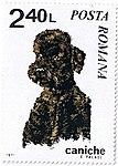 Poodle-Canis-lupus-familiaris Romania 1971.jpg