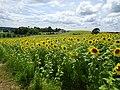 Pope Farm Conservancy - panoramio - Corey Coyle (7).jpg