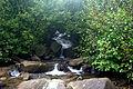 Pozhyzhevska Alnus viridis.jpg