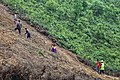 Preparing land for Shifting Cultivation.jpg