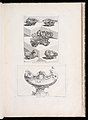 Print, Differents Desseins de Sallieres (Various Designs for Salt Dishes), pl. 63 in Oeuvre de Juste-Aurele Meissonnier, 1748 (CH 18222503-2).jpg