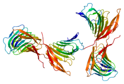 Protein CAP1 PDB 1k8f.png