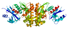Protein PANK1 PDB 2i7n.png