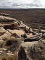 Puerco Pueblo petroglyphs (16319214591).jpg