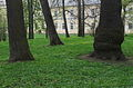 Pulawy Park2.jpg