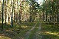 Puszcza Zielonka, okolice Trzaskowa (2).JPG