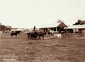 Queensland State Archives 2368 Chaffcutting in East Talgai 1897.png
