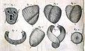 R. Lower, Tractatus de Corde, 1669 Wellcome L0020409.jpg
