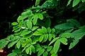 Rainy plant.jpg