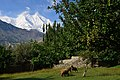 Rakaposhi seen from Hunza, Gilgit-Baltistan.jpg