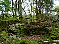 Ramshaw Wood, Martyrs Hill covenanters gravesite, Buittle.jpg
