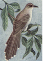Reed-black-billed.png
