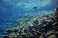 Reef aquarium at Burgers' Zoo (a).jpg