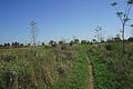 Reforestation Near Kings Forest Hamilton Ontario.JPG
