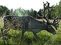 Reindeer in Lapland.jpg