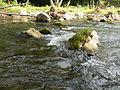 Reka Jerma 03.JPG