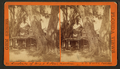 Residence of Harriet Beecher Stowe, Florida, from Robert N. Dennis collection of stereoscopic views 6.png