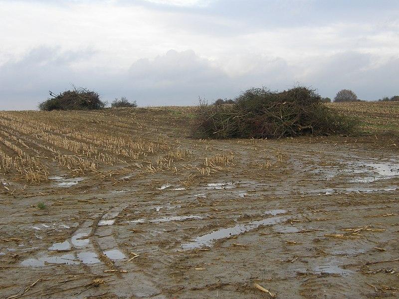 Réville-aux-Bois (Meuse). Arrachage d'une haie entre deux champs de maïs, après le retournement d'une prairie.