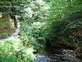 River Lyd, Lydford Gorge - geograph.org.uk - 743642.jpg