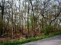 Roadside woodland - geograph.org.uk - 401103.jpg