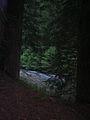 Rockefeller Grove - Bull Creek.jpg