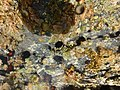 Rocky shallow pool St Croix US Virgin Islands.jpg