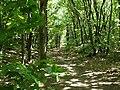 Route du Faîte (Forêt domaniale de Montmorency) - panoramio - Eric Bajart (1).jpg