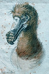 Painting of a dodo head from the chest up